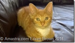 Clyde Kitten Eileen Brown Amastra